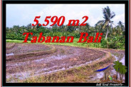 Magnificent PROPERTY 5,590 m2 LAND FOR SALE IN Tabanan Selemadeg TJTB257