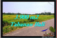 Beautiful PROPERTY 3,900 m2 LAND IN Tabanan Selemadeg FOR SALE TJTB258